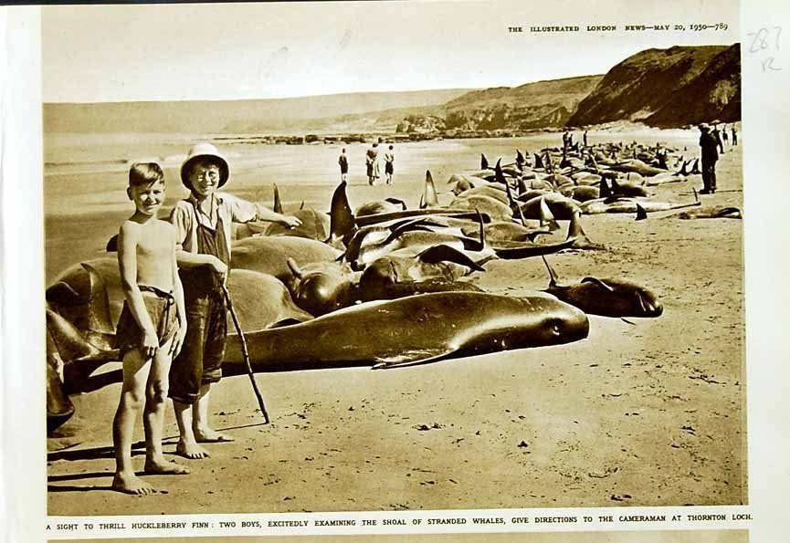 whales at Dunbar